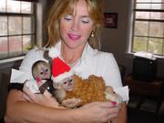 Healthy male and female capcuhin monkeys for adoption to any good ho